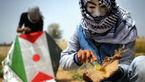 بادبادکهای آتشین؛ جدیدترین سلاح جوانان فلسطینی+ عکس