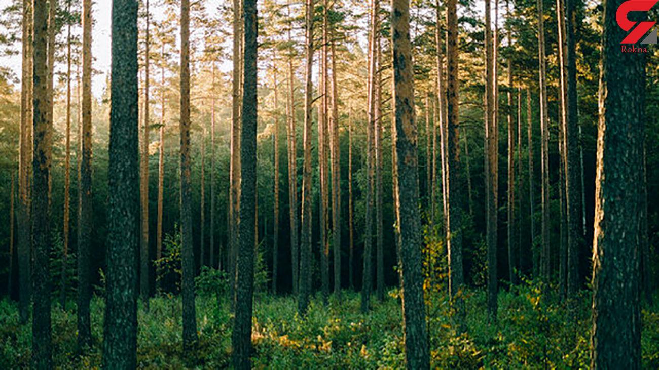 این ربات مواد باارزش درختان را برداشت می کند