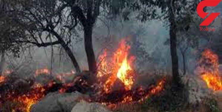منطقه حفاظت شده «چهل پا» در اندیمشک  آتش گرفت