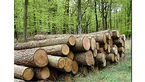 کشف یک تن چوب جنگلی بلوط قاچاق در اردل
