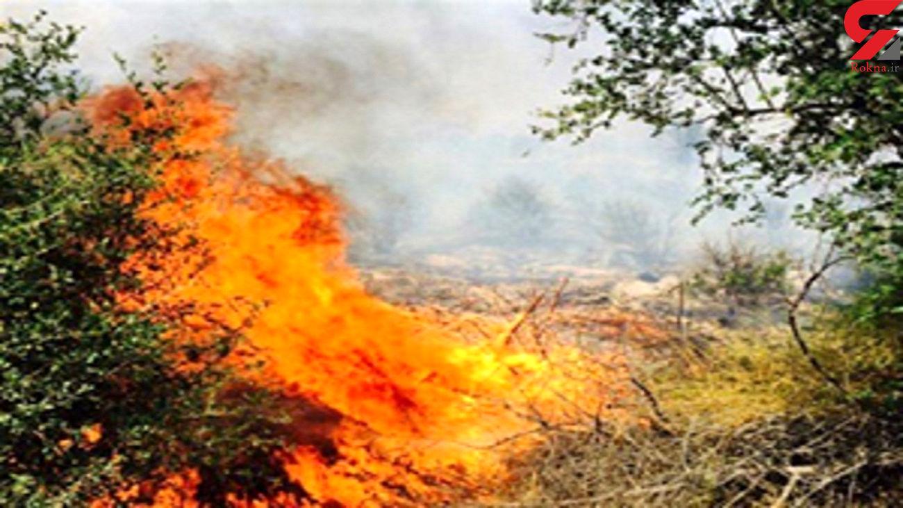 656 هکتار اراضی طبیعی و ملی لرستان در آتش سوخت