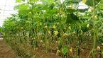 روش جدید برای مبارزه با افت های گیاهی
