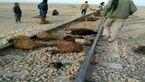 برخورد قطار زنجان - تهران با گله گوسفند در تاکستان