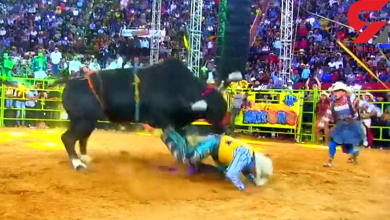 انتقام سخت و وحشتناک گاو وحشی از گاوبازها در میدان مسابقه + فیلم