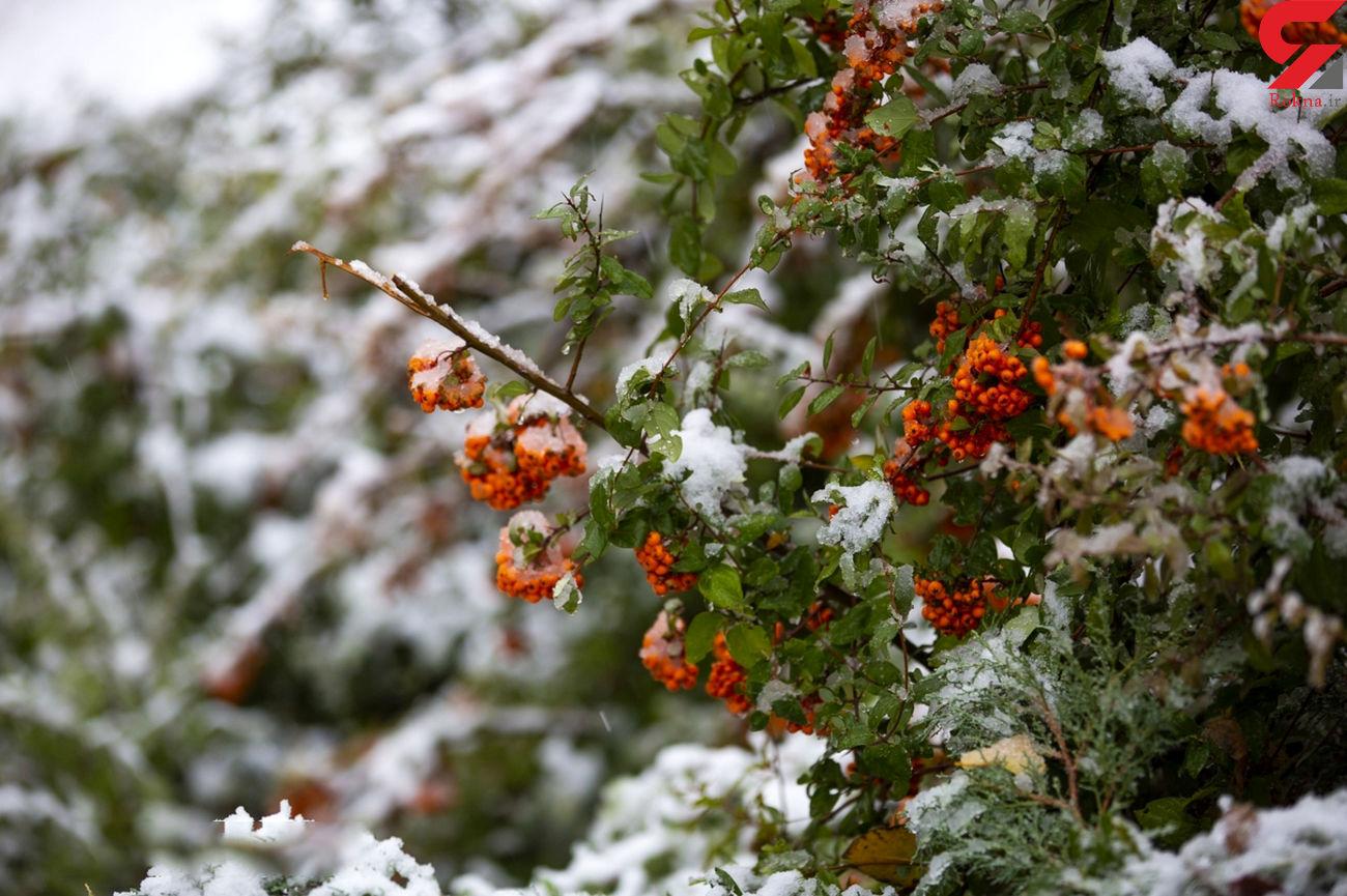پیشبینی برف ۴۰سانتی در برخی از مناطق کشور
