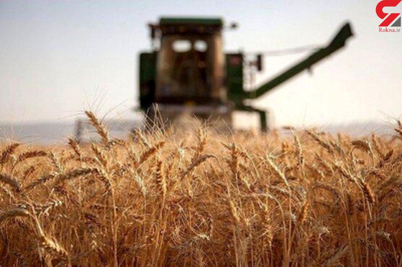 فعالیت حدود 450 دستگاه کمباین در زمین های کشاورزی استان