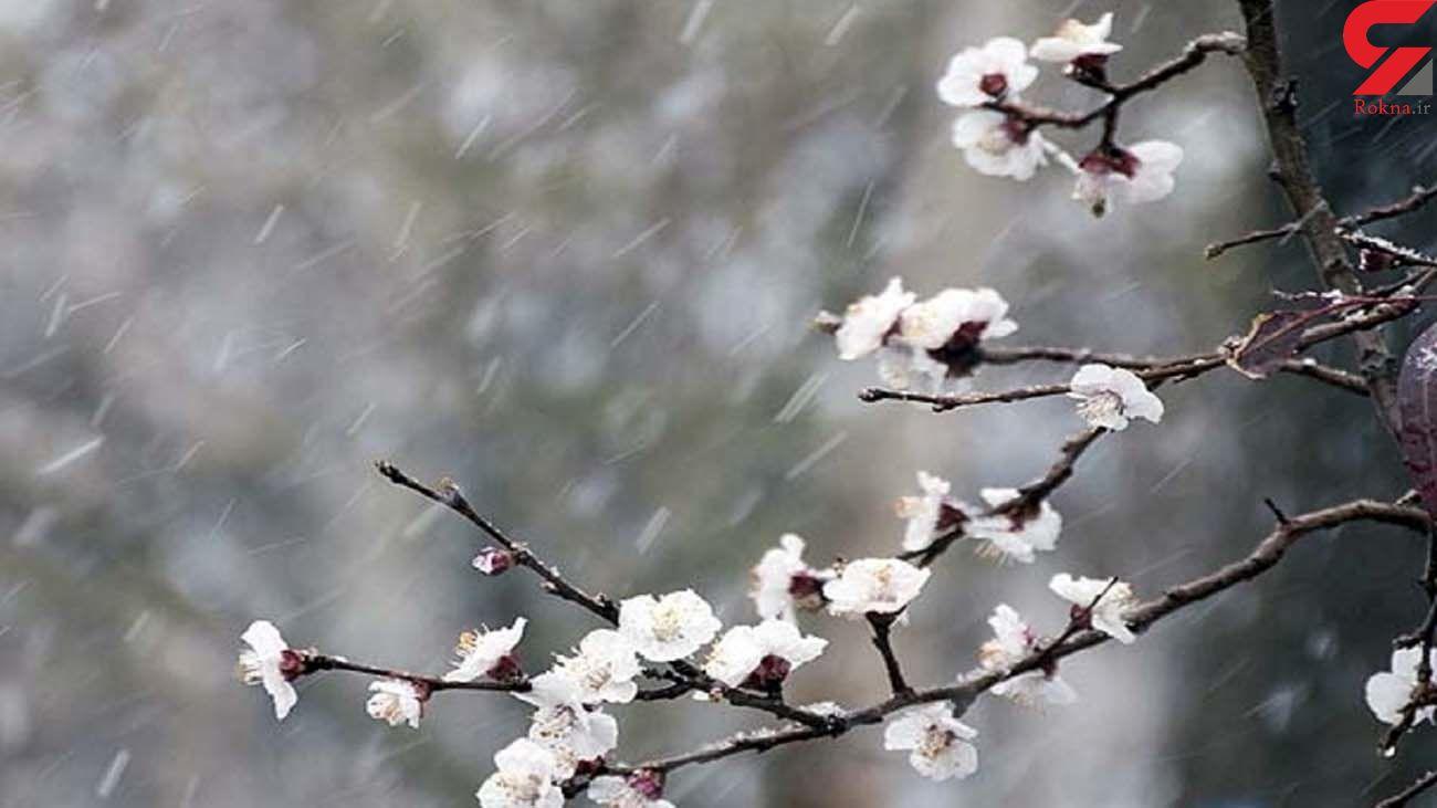 هشدار /  بارش برف و باران در 23 استان کشور/ ورود سامانه  از فردا
