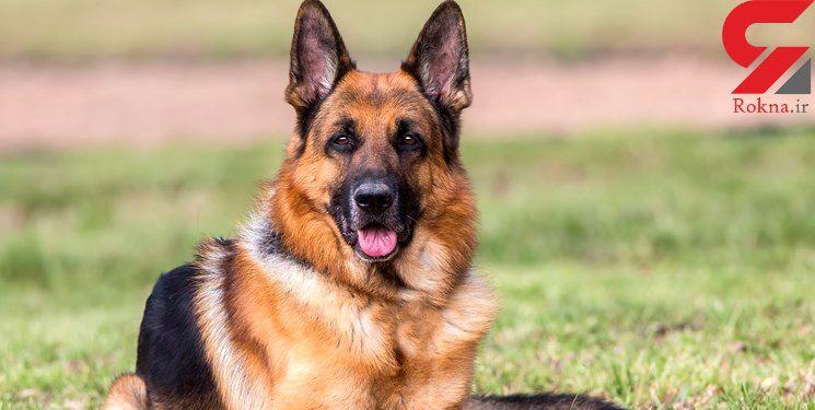 دومین سگ کرونایی شناسایی شد/ هنگ کنگ