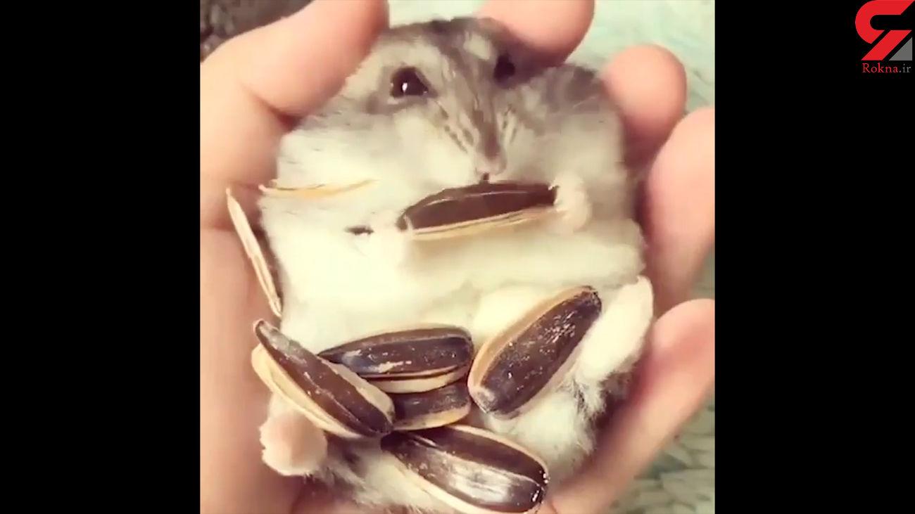این خرگوش عاشق تخمه است + فیلم