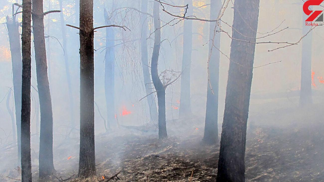 آتشسوزی اراضی جنگلی تالش مهار شد