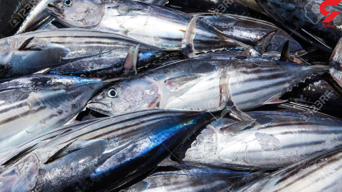 قیمت ماهی و میگو امروز چهارشنبه 28 آبان 99 + جدول