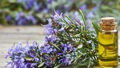 گیاه ضد آلزایمر کشف شد