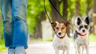 جوانانی که استخدام سگ پولدارهای تهران هستند