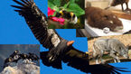 حیوانات رو به انقراض جهان +عکس های دیدنی