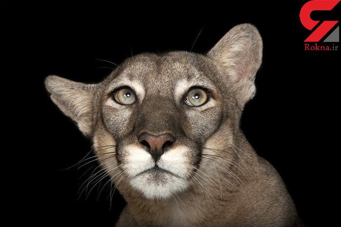 عکاسی پرتره از انقراض گونههای بسیار ارزشمند حیوانی +تصاویر