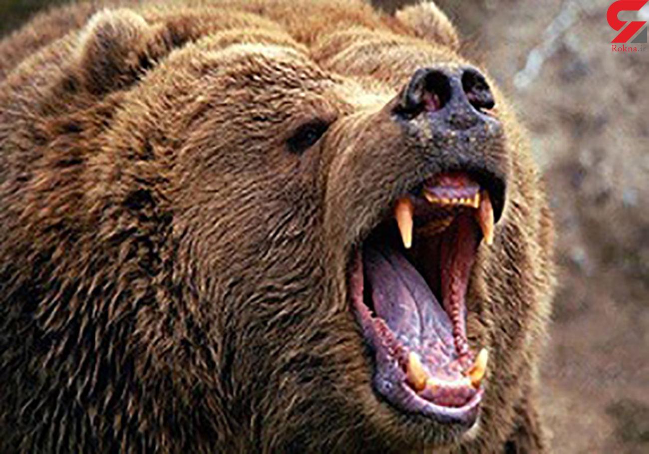 حمله خرس به یک گردشگر کرجی / مردم به کمک او شتافتند