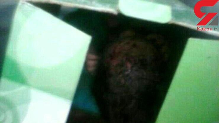 گریه های یک دختر بدون لباس در میان شمشادهای منطقه وحدت کرج+ عکس