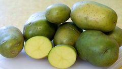 مرگ در کمین مصرف کنندگان سیب زمینی سبز رنگ