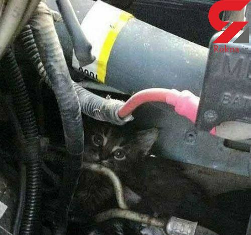 گربه های بی پناه در این فصل چگونه کشته می شود