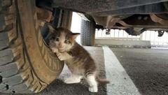 خودروها پناهگاه گربهها در فصول سرد سال هستند