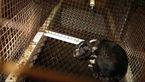 مجازات حبس برای یک مرد به خاطر حیوانآزاری