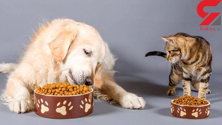 این سگ و گربه ها یک میلیون دلار ایرانی ها را می خورند + سند
