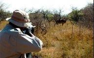 دستگیری شکارچی حیوانات نادر در پارک ملی لار