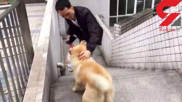 سگ وفاداری که نصف روز انتظار دیدن صاحبش را می کشد+عکس