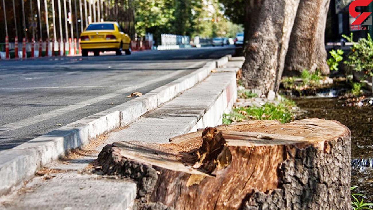 نگرانی از وضعیت پایداری درختان کهنسال تهران