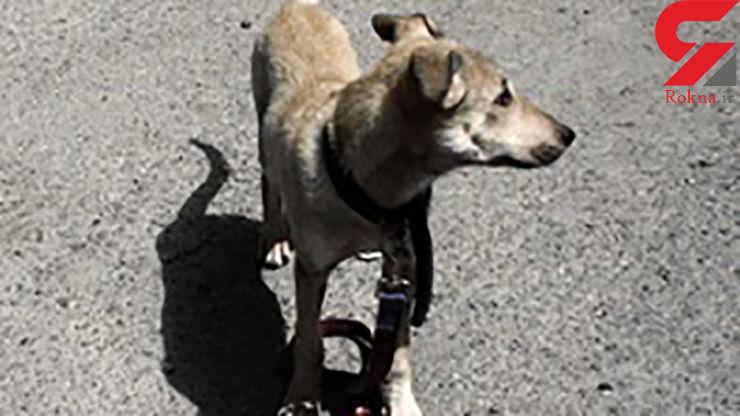 شکنجه گر سگ ها در فومن شلاق می خورد!