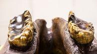 دانش آموزی استخوان یک حیوان دو متری ماقبل تاریخ را کشف کرد + عکس