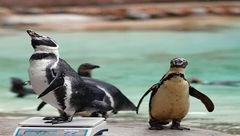 حیواناتی عجیبی که وزنکشی می شوند+ تصاویر