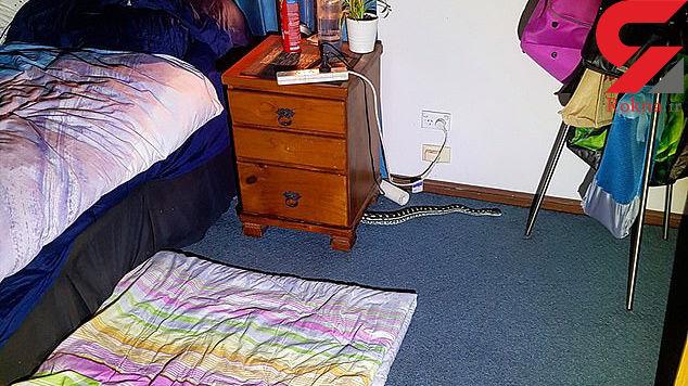 کشف مار پیتون در زیر تخت خواب زن جوان + عکس