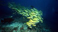 تأثیر تغییرات اقلیمی بر زیستگاه جانواران دریایی