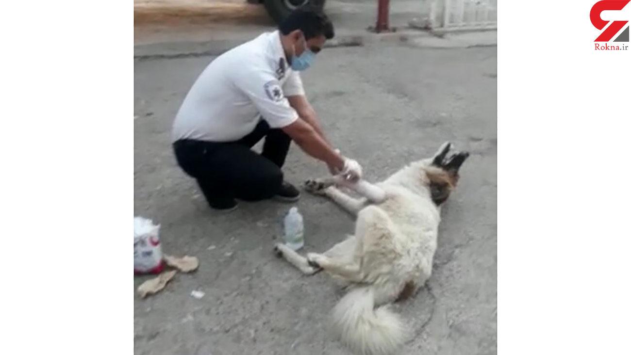 عکس از پناه بردن سگ دست شکسته به اورژانس جاده ای باشت + فیلم