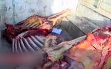 فیلم لحظه بازداشت عاملان سلاخی الاغ و اسب برای فروش در تهران/ این فیلم لرزه به تن می اندازد