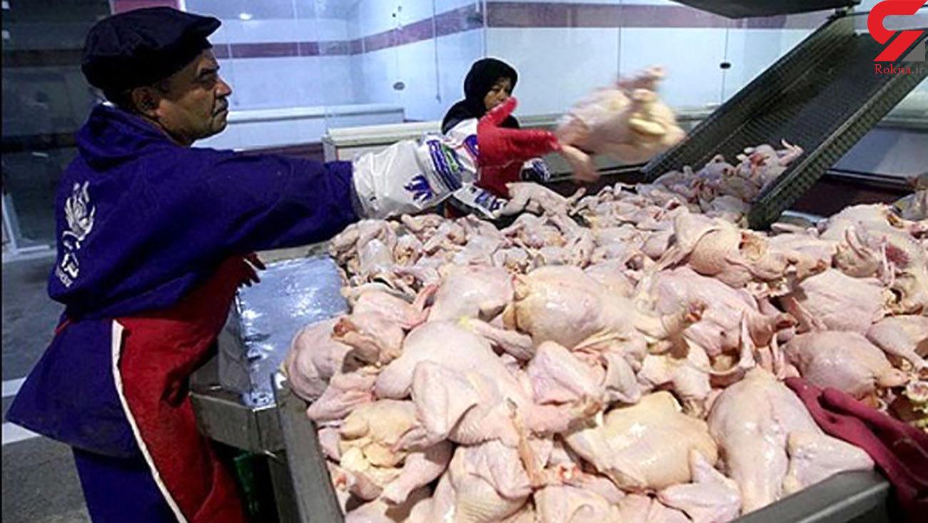 مرغ گران تر می شود؟