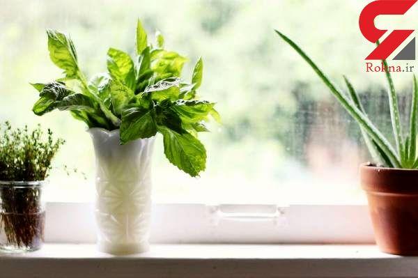 فوت و فن های کاشت این سبزی خوشمزه در خانه