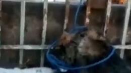 جزییات دار زدن سگها توسط شهرداری تبریز / نقش یک زن چیست ؟ + فیلم کامل