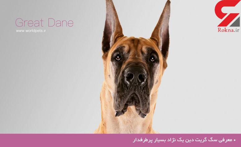 معرفی سگی که یک نژاد بسیار پرطرفدار است