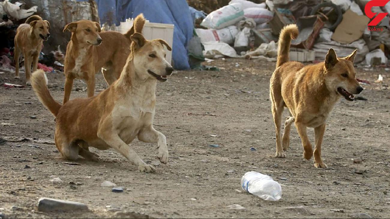 حمله سگ های ولگرد به پسر 8 ساله در یزد / به کما رفت
