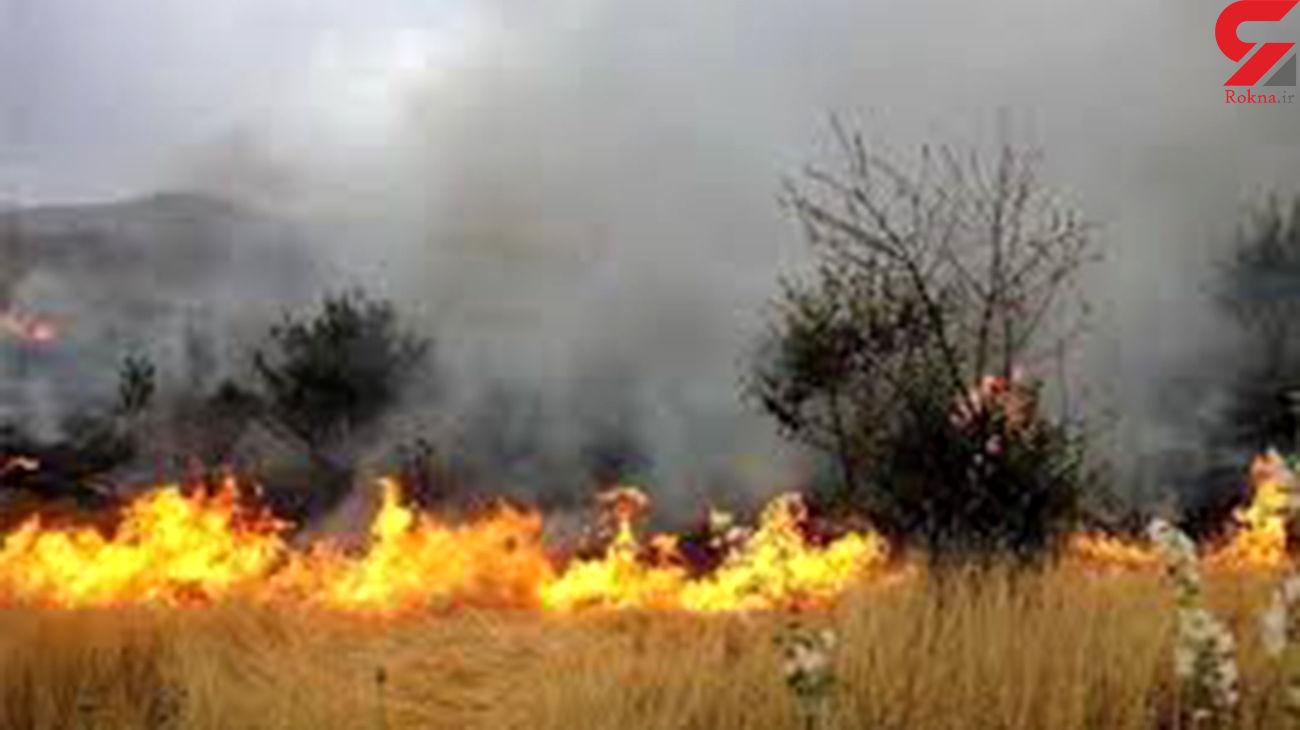 آتش سوزی 11 هکتار از گندمزارهای روستای قمچ آباد ابهر