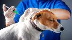 واکسیناسیون کرونایی حیوانات خانگی چه زمانی است؟