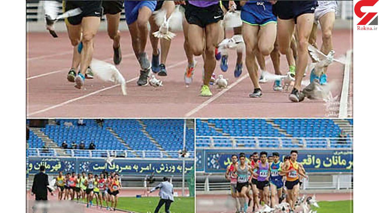 کبوترها ورزشگاه امام رضا(ع) را به هم ریختند + عکس عجیب