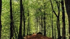آنچه درباره بیماری جنگل ها باید بدانیم