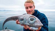 صید ماهی عجیب الخلقه در نروژ + عکس