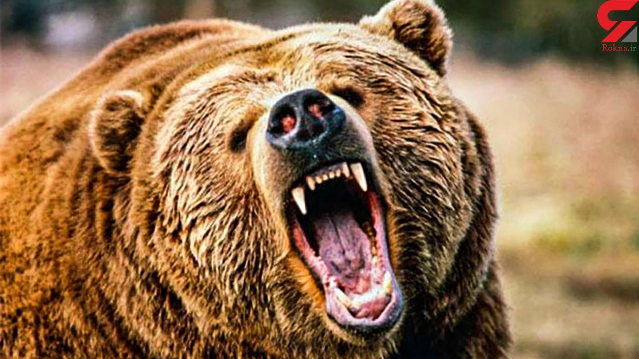 فیلم لحظه گرفتار شدن یک زن در چنگال های خرس وحشی