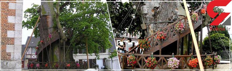کلیسایی عجیب بر فراز یک درخت کهنسال + فیلم و عکس