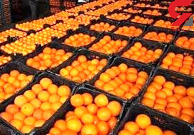 برای شب عید باید پرتقال وارد کرد وگرنه گران می شود