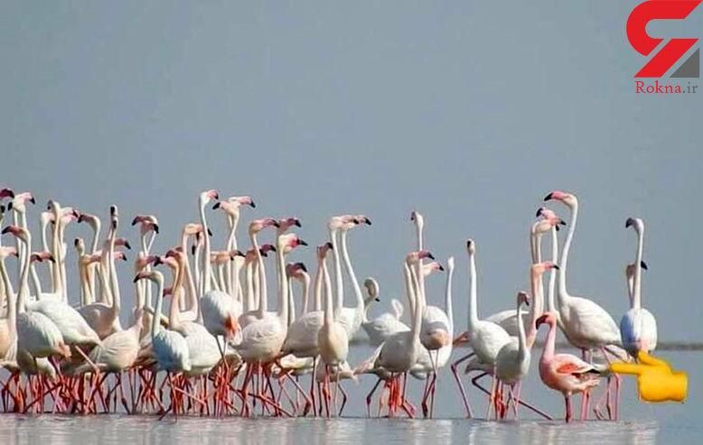 آبادان میزبان کمیابترین پرندگان خاورمیانه شد / برای نخستین بار رخ داد